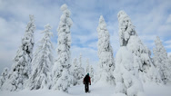 Stock Video Footage of Male walker wearing snow shoes Riisitunturi NP tykky Lapland Finland
