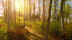 sunset trees. woods. trees. plants nature background. summertime. aerial view - stock footage