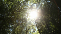 Sun's Rays - Natural Energy - stock footage