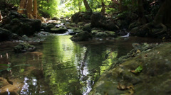Stream waterfall in tropical forest - stock footage