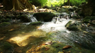 Stock Video Footage of Deep forest waterfall
