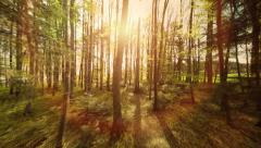 Forest trees. woods. trees. plants nature background. summertime. aerial view Stock Footage