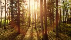 sun flare light. nature plants. aerial view. trees forest silhouette - stock footage