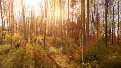 aerial view. trees forest silhouette. springtime. sun flare light. nature plants - stock footage