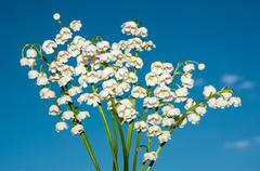lily of the valley - the symbol of spring, warmth, purity and tenderness - stock photo