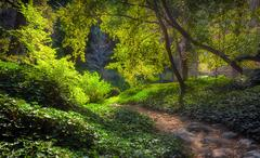 Sunlit Path at Chantry Flats in Early Morning - stock photo