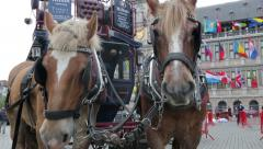 Horse and carriage at town hall, antwerp, belgium Stock Footage