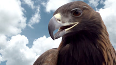 Eagle Head Against the Sky Stock Footage