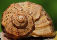 sea  shell from black sea - stock photo