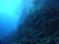Ocean scenery wall with divers on the surface shot from far below in great Stock Footage
