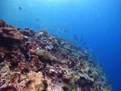 Ocean scenery on semi-protected coral slope, HD, UP15393 Stock Footage