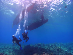 Group of scuba divers swimming on shallow coral reef in Kingdom of Tonga, HD, Stock Footage