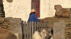 Old woman farmer in Mykonos Island in Greece Stock Footage
