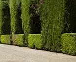 Garden with green bushes Stock Photos