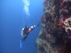 Housed SLR photographer attacking camera on wall with Moon wrasse in Fiji Stock Footage