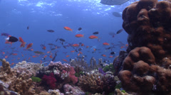 Ocean scenery wonky lockdown, beautiful, lots of action, on shallow coral reef, Stock Footage