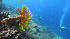 Group of scuba divers on semi-protected coral slope with Bennett's rainbow - stock footage