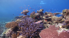 Ocean scenery on shallow coral reef, HD, UP16443 Stock Footage