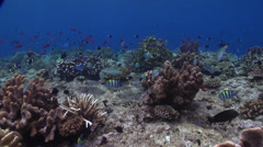Ocean scenery surge, on shallow coral reef, HD, UP16467 Stock Footage
