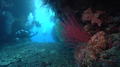 Group of scuba divers feeding in swimthrough with Red sea whips in Fiji Islands, Stock Footage