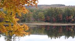 Fall Foliage on Maine Lake Stock Video Stock Footage