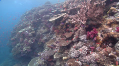 Stock Video Footage of Ocean scenery ends looking up to surface, on shallow coral reef, HD, UP16676
