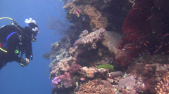 Lone diver hovering on shallow wall in Fiji Islands, HD, UP16728 Stock Footage
