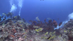 Ocean scenery shark feed, in fish feeding arena, HD, UP16744 Stock Footage