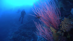 Group of scuba divers swimming on deep wall with Red sea whips in Fiji Islands, Stock Footage