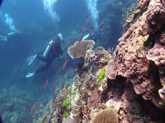 Buddy team of scuba divers exploring on shallow coral reef in Fiji Islands, HD, Stock Footage