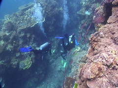 Group of scuba divers swimming on shallow coral reef in Fiji Islands, HD, Stock Footage
