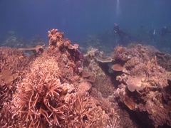 Distant scuba diver hovering on shallow coral reef in Fiji Islands, HD, UP16877 Stock Footage