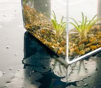 Aquatic plant in a water cube Stock Photos
