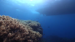 Ocean scenery dive boat above reef with anchor dropped too close, on soft coral Stock Footage