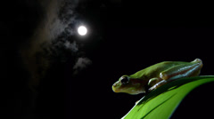 Southern frog at night with full moon and clouds Stock Footage