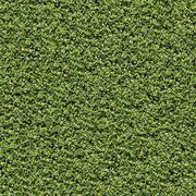 Laurel Bush. Seamless Tileable Texture. Stock Photos