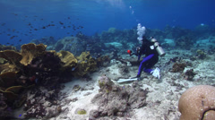 Photographer with strobe flash taking images on shallow coral reef with Cabbage Stock Footage