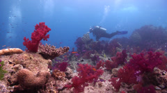Group of scuba divers on shallow coral reef with Variable soft coral Scalefin Stock Footage