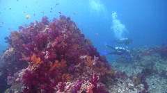 Ocean scenery divers hanging on in strong current, on coral reef, HD, UP17035 Stock Footage