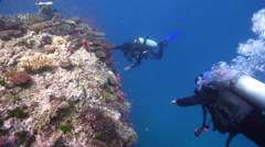 Local dive guide exploring on coral bommie in Fiji Islands, HD, UP17161 Stock Footage
