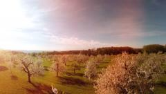 Aerial view. spring trees background. springtime. sun flare light. nature plants Stock Footage
