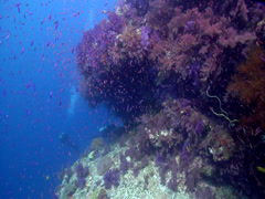 Ocean scenery diver under ledge, beautiful, current, lots of action, on shallow Stock Footage