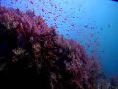 Ocean scenery beautiful, current, lots of action, on shallow coral reef, at Stock Footage