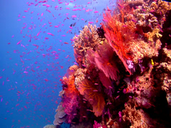 Ocean scenery on shallow coral reef, HD, UP17651 Stock Footage