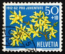 Stock Photo of Postage stamp Switzerland 1962 Forsythia, Forsythia Suspensa, Fl
