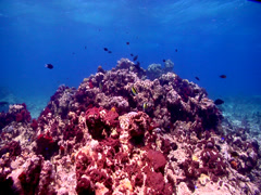 Ocean scenery in deep water passage, HD, UP17744 Stock Footage