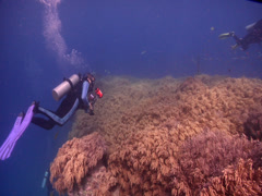 Expert diver with perfect buoyancy on shallow coral reef with Slimy leather Stock Footage