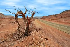 Dead tree on roadside in desert. Stock Photos