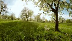 Flying trough spring trees. silhouette. springtime. sun flare light. nature Stock Footage