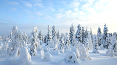 Male walker wearing snow shoes Riisitunturi NP tykky Lapland Finland - stock footage